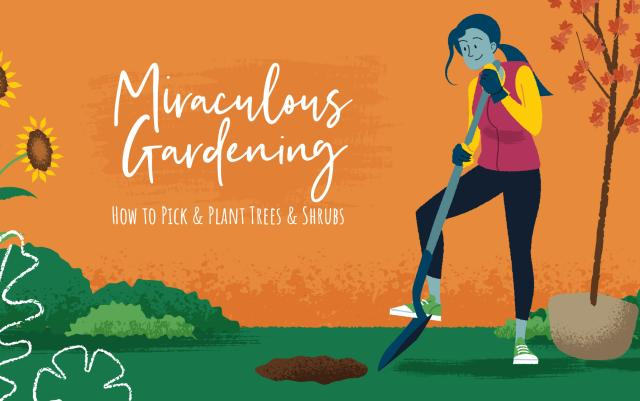 Miraculous Gardening: How to Pick and Plant Trees and Shrubs - Illustration of a woman planting trees and shrubs in a garden for the Fall season.