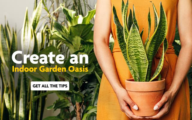 A woman in an orange dress holds a spider plant in a terra cotta pot, with a row of houseplants behind her.