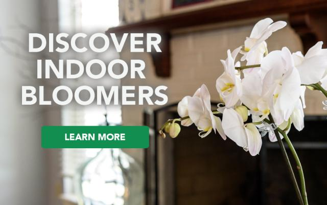 Discover Indoor Bloomer