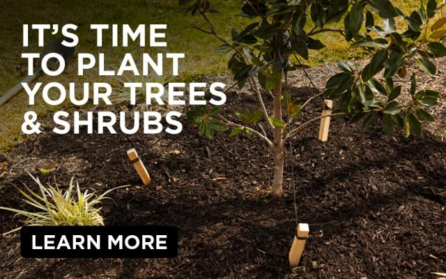 Its time to plant your trees and shrubs - Learn more - Trees and shrubs growing in a garden.