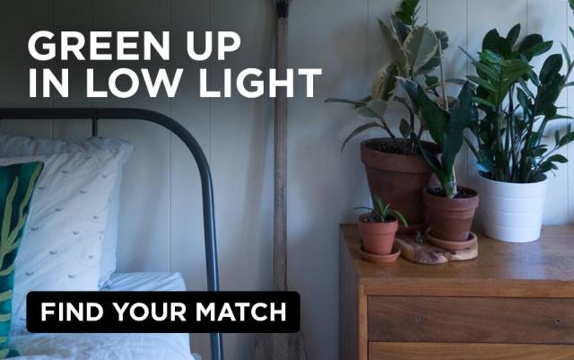 Shade-friendly indoor plants, like the ZZ, add foliage to a bedroom with low light.