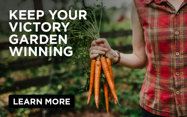 Keep Your Victory Garden Winning: Young woman in sleeveless plaid shirt holding just-harvested bunch of carrots