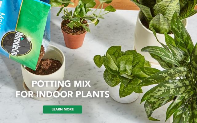 Gardener using potting soil for a plant with caption- potting mix for indoor plants