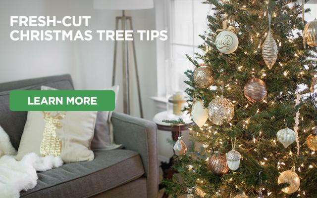 Christmas tree with white and gold decorations in living room