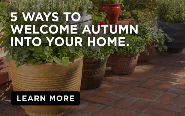 Plants in pots with caption- Five ways to welcome Autumn into your home