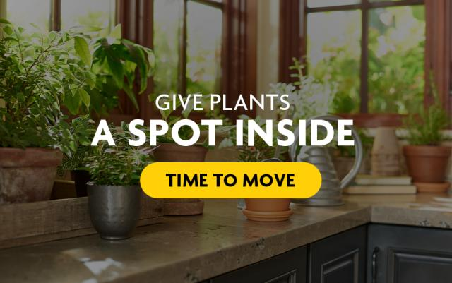 Indoor container plants sitting on kitchen counter.
