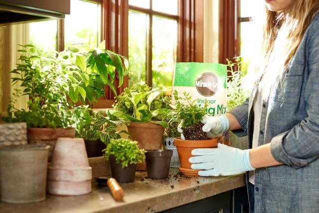 potting plant with Miracle-Gro® Indoor Potting Mix