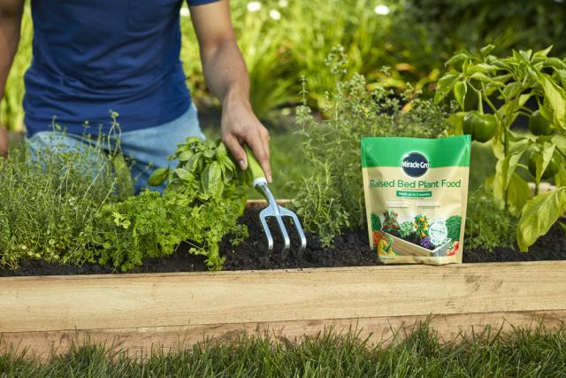 raking Miracle-Gro® Raised Bed Plant Food into soil