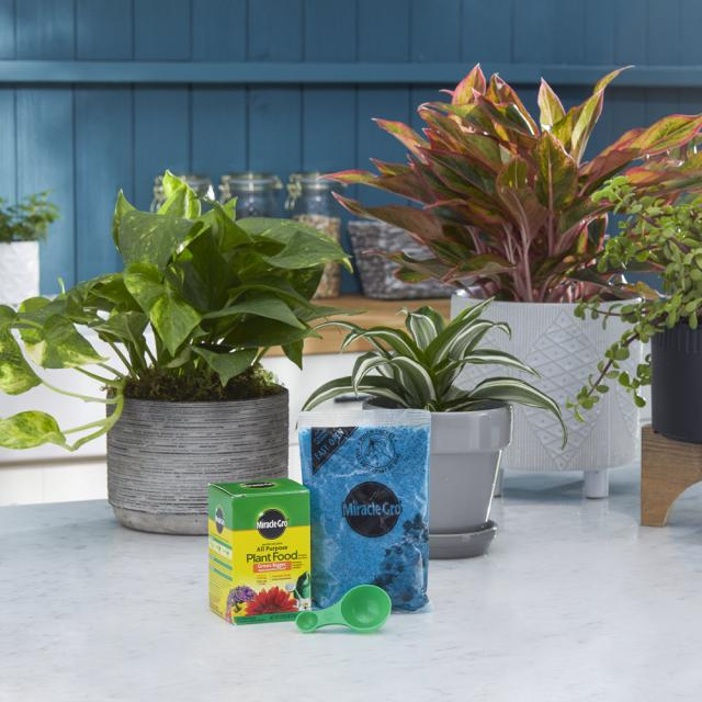 Miracle-Gro® Water Soluble All Purpose Plant Food sitting on counter with plants