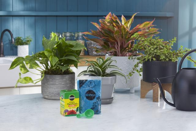 Miracle-Gro® Water Soluble All Purpose Plant Food featured on counter.
