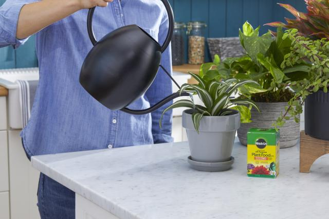Person feeding plant with watering can.