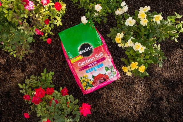 Garden Soil For Roses Rose Fertilizer Miracle Gro