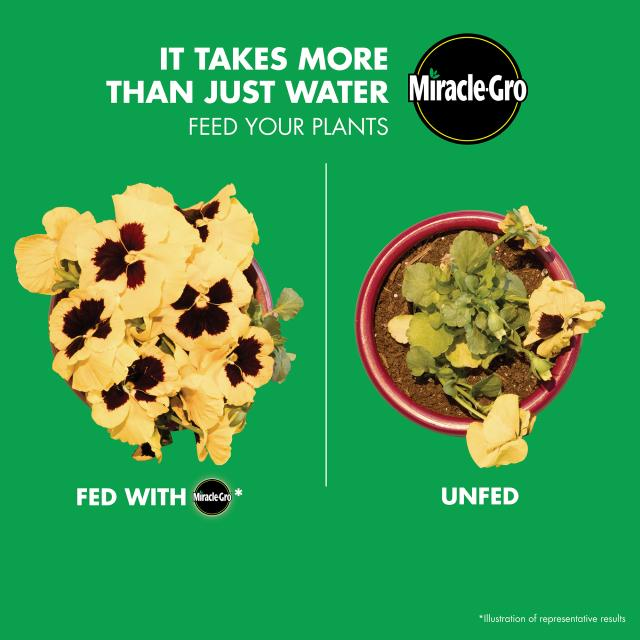 An image comparison of a plant with Miracle-Gro® Shake 'n Feed® All Purpose Plant Food and without. Text reads it takes more than just water, feed your plants.