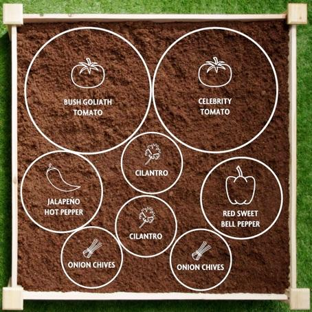 Salsa Garden Diagram