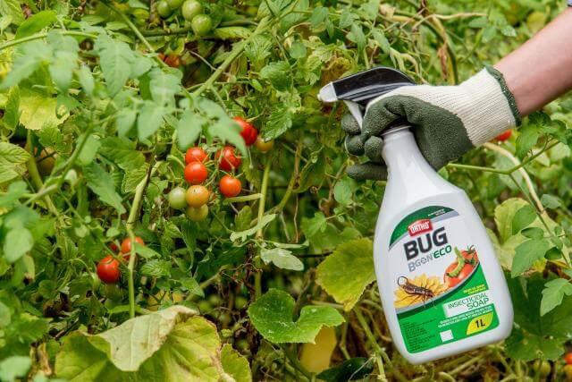 Ortho® Bug B Gon® ECO Insecticidal Soap Ready-To-Use being used.