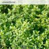 3-AromaticHerbs-800px-PDP8.jpg - Miracle-Gro® Aromatic Herb Garden
